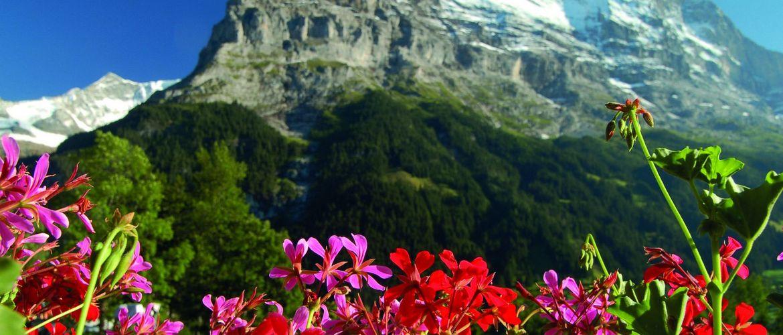 Grindelwald 01
